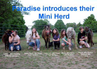 Mini Herd Introduction website